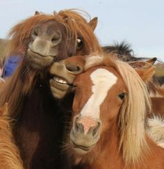Funny animal selfies can make your day happier. These selfies will make you laugh for hours. Check out these 30 Funniest Animal Selfies. Pretty Horses, Horse Love, Beautiful Horses, Animals Beautiful, Beautiful Cats, Beautiful Life, Animals And Pets, Funny Animals, Cute Animals