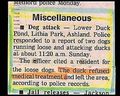 Image detail for -funny newspaper headlines duck refuses medical treatment