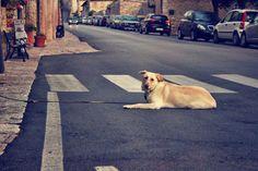 #Brutale #Attacken auf #Hunde und #Hundebesitzer in #Europa