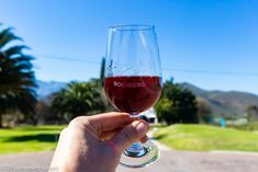 Some highlights from the Robertson Wine Valley, a popular wine region about two hours north of Cape Town. Cape Town, Wine Tasting, Red Wine, South Africa, Alcoholic Drinks, Highlights, Popular, Day, Liquor Drinks