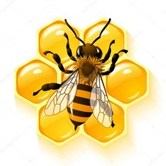 Bee on honeycombs background vector illustration