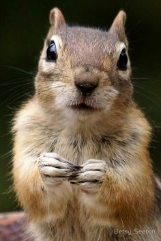 An up-close photo of a very cute squirrel. The details are amazing, you can see all the nuances of his face and body. Animals And Pets, Baby Animals, Funny Animals, Cute Animals, Animal 2, Mundo Animal, Squirrel Pictures, Animal Pictures, Animals Tattoo