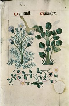 Tudor Herbal circa 1520 - Retronaut
