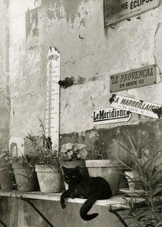 gueule-de-loupviolette:  Le Chat , France ( 1955)