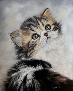 'Lovely Kitten' by Agnès TURC. Lovely Kitten, soft pastels, Panpastels and pastel pencils on Pastelmat 24 x 30 cm.