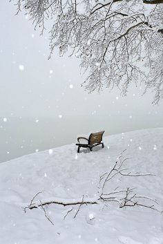 Snowy Day (西湖的雪天) | Flickr - Photo Sharing!