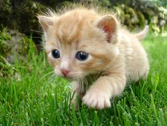 35 Exceptionally Cute and Cuddly Baby Animal Photos