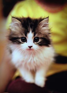 oh you sweet lil kitteh