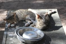 Greece, Cats, Animals, Greece Country, Gatos, Animales, Kitty Cats, Animaux, Animal Memes