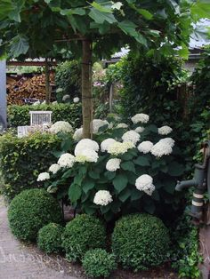 Hydrangea Landscaping, Small Yard Landscaping, Small Backyard Design, Small Garden Landscape, Small Garden Inspiration, Flower Garden Design, Garden Cottage, Small Gardens, White Gardens