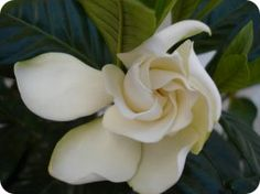 Flores y plantas para la buena suerte