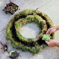 Einen lebendigen Kranz selber machen - Gartengestaltung                                                                                                                                                                                 Mehr