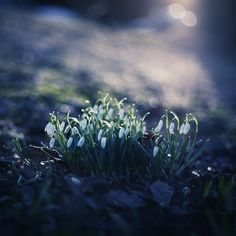 One morning in springtime.