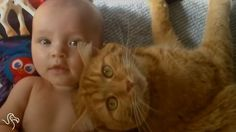 WATCH: Pets Who Are Great Babysitters