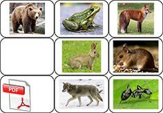 La moufle - photos des animaux Grande Section, Petite Section, Album Jeunesse, Forest Animals, My Job, Gnomes, Books, Cycle 1, Chant