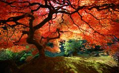 i bet you if faeries exist they live right here under this tree...