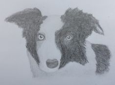 Image Gallery for Andy Corby Border Collie, Digital Marketing, Sketch, Gallery, Image, Sketch Drawing, Roof Rack, Sketches, Border Collies