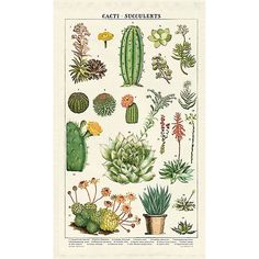 - Soja Room Makeover Cactus and Succulents Vintage Style Poster - Cactus Poster . - Soja Room Makeover -Cactus and Succulents Vintage Style Poster - Cactus Poster . Vintage Botanical Prints, Botanical Drawings, Botanical Art, Vintage Prints, Vintage Posters, Vintage Style, Vintage Botanical Illustration, Botanical Posters, Vintage Inspired