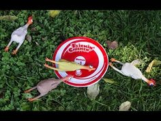 Flinging a rubber chicken, competitively, turns out to be as silly as you would think. It's entertaining and engaging for all ages. Summer Activities For Kids, Summer Kids, Games For Kids, Fun Activities, Family Games, Outdoor Activities, Fall Festival Games, Chicken Games, Backyard Carnival