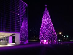 Here's another purple Advent tree. This one is at Christ Cathedral in the Diocese of Orange. To the left of the tree, you see it's reflection in the Cathedral.