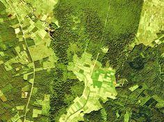 File:Picea torano forest of Yamanakako village Aerial Photograph. Urban Design Plan, Aquarium, How To Plan, Goldfish Bowl, Aquarium Fish Tank, Urban Planning, Aquarius, Fish Tank
