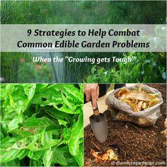 9 Strategies to Help Combat Common Edible Garden Problems