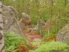 fountainebleau forest, france