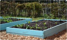 What could possibly be more appropriate for a garden in NM than turquoise planting beds?