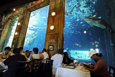 One of uShaka& attractions is the Cargo Hold restaurant, where diners eat while sharks look on, possibly licking their lips. Air Hotel, Shark Watches, Durban South Africa, Future Travel, Hot Springs, Continents, National Geographic, Traveling By Yourself, Places To Go