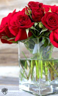 Beautiful Red Roses
