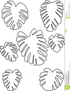 Find Outline Drawing Monstera Leaves Tropical Plant stock images in HD and millions of other royalty-free stock photos, illustrations and vectors in the Shutterstock collection. Thousands of new, high-quality pictures added every day. Leaves Template Free Printable, Leaf Outline, Plant Vector, Outline Drawings, Plant Drawing, Paper Flowers Diy, Leaf Art, Tropical Plants, Flower Prints