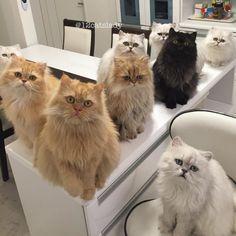 Happy Friday to all... Follow us on Instagram :D #cats #cat #catlover #lovecats #funny #fun #cute #socute #feline #felines #felinefriend #fur #furry #paw #paws #kitten #kitty #kittens #kittycat #kittylove #fluffy #fluff
