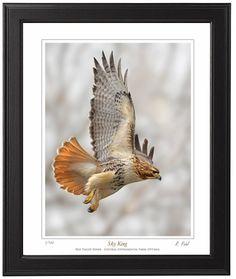 framed-hawk