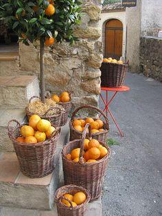 Le mas des orangers Biot ~ Provence