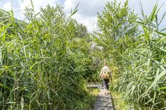 Barfusswanderweg Schweiz - Sentier Pieds Nus Rebeuvelier Herbs, Plants, Barefoot, Pathways, Ideas, Herb, Plant, Planets, Medicinal Plants