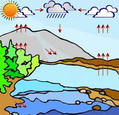 the o 39 jays nature and quizes on pinterest : water cycle diagram quiz - findchart.co