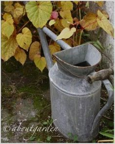 unique vintage watering can