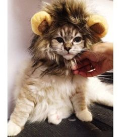 Lion Mane Wig for Dog and Cat Costume Pet Adjustable Washable Comfortable Fancy Lion Hair Dog Clothes Dress for Halloween Christmas Easter Festival Party Activity >> Don't get left behind, see this great cat product : Christmas Presents for Cats