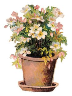 pink potted flowers