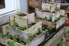 Google Image Result for http://3.bp.blogspot.com/-21_Sz9DPFs4/TWK8yD7bflI/AAAAAAAAARk/oG2K0-Jeru8/s1600/Garden%2B3.JPG