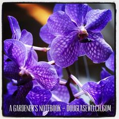 Photo: Purple Orchid from the Southern California Spring Garden Show 2014 via #instagram