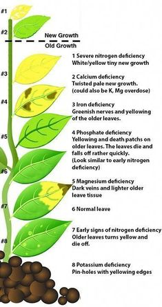 Cheat Sheet for Plant Nutrients Cheat Sheet for Plant Nutrients theunreyna theunreyna gardening Photography Plants Plant nutrients Garden Vegetable garden tips Hydroponic gardening Edible garden […] diy nutrients Hydroponic Farming, Hydroponic Growing, Hydroponics, Aquaponics Plants, Aquaponics System, Growing Vegetables, Growing Plants, Growing Tomatoes, Root Vegetables