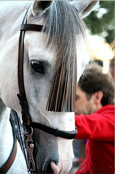 those eyes are so typical for the Andalusian