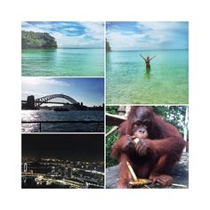 Just a few from the last week in Indonesia Sydney & Singapore. Oh and when I ate breakfast with the orang-utans - how cute is he  Didn't go to the gym once when I was there but I've had the most amazing week so who cares  #crewlife#gettingpaidforthis#travel#wanderlust#bucketlist#downunder#singapore#sydneyharbourbridge#cabincrew#australia#asia#workworkworkworkworkwork#amazing#paradise#britishairways#fitlife#fitfam#needtogetbackinthegymasap by oliviameffan http://ift.tt/1NRMbNv