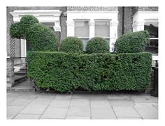 The Loch Hedge Monster, Wandsworth - by Graham! via Flickr