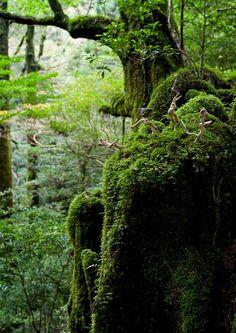 流木の魂 森に帰る-5-2