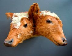 Skinner And Hyde: Weird Old Taxidermy