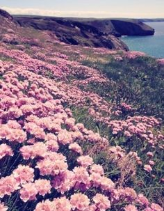 field of wild flowers on the cliffs over the ocean ~summer time sadness~