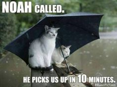 How funny is this photograph? Two cats sitting in the rain underneath a big umbrella waiting for the Ark to take them away from the flood Crazy Cat Lady, Crazy Cats, I Love Cats, Cute Cats, Funny Kitties, Cat Umbrella, Black Umbrella, Funny Animals, Cute Animals