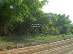 Amazing farm property with 110ft of river frontage. #BelizeRealEstate #CPCBelize